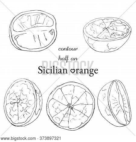 Set Of Contour Half An Sicilian Orange