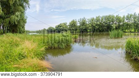 Pond With Still Water Overgrown With Marsh Plants And Shores With Willows, Backwater On A Foreground