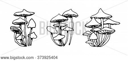 Set Of Forest Poisonous Fungus, Toadstools, Honey Agaric, Ingredient For Magical Antidote, Potions,