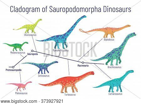 Cladogram Of Sauropodomorpha Dinosaurs. Colorful Vector Illustration Of Diagram Showing Relations Am