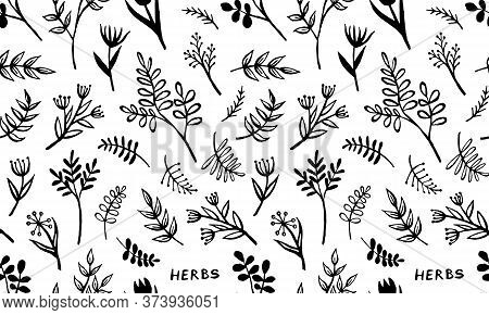 Hand Drawn Vector Seamless Pattern With Herbs. Doodle Floral Element. Spring And Summer Symbol. Cont
