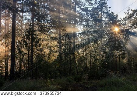Foggy Forest During Sunrise With Visible Sunrays In Karelian Isthmus, Karelia, Russia, Near Yastrebi