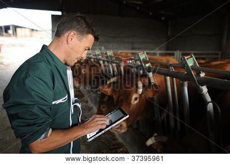 Farmer in barn using digital tablet