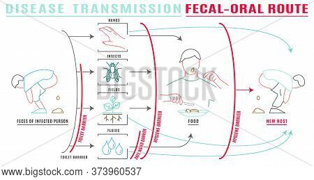 Infectious Disease Transmission Landscape Poster. Virus Pandemic Transfer. Fecal-oral Type. Medical,