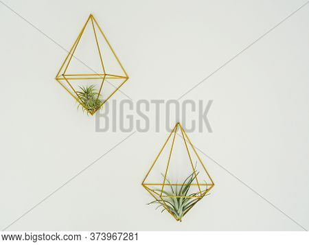 Two Air Plants Or Tillandsia ( Bromeliaceae) In A Golden Hanger On A White Wall