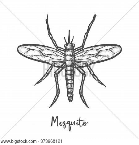 Sketch Of Malaria Mosquito Or Insect Sketching