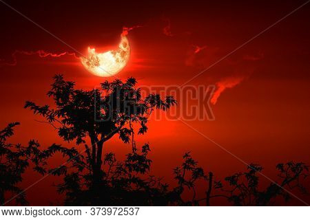 Full Hunger Moon On Night Sky Back Silhouette Tree And Cloud