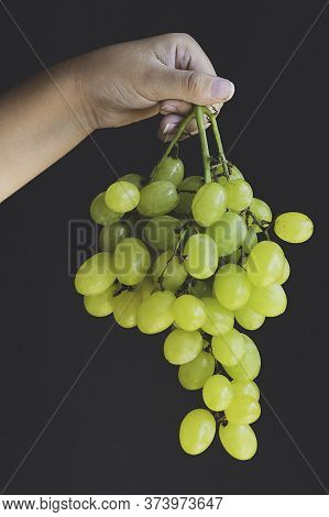 Child's Hands Holding A Bunch Of Grapes On Black Background Bunch Of Green Seedless Grapes