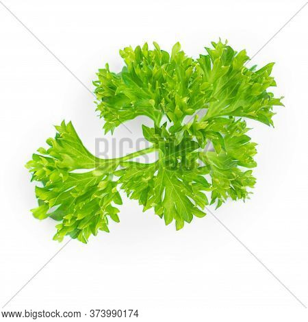 Parsley. Green Leaves Of Parsley Herb Isolated On White Background.  Close Up. Top View
