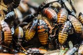 Large heap of nature insect beetle or bugs poster