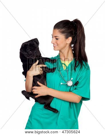 Brunette vet with a pug dog isolated on white background poster