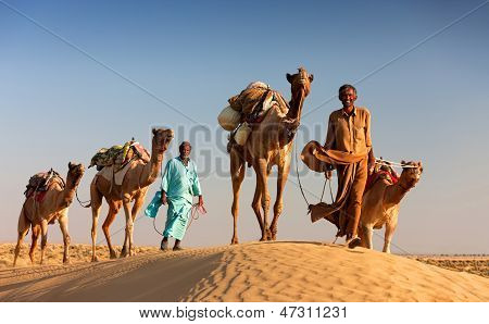 Camel Man Leads His Camels Across The Thar Desert