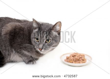 Grey Cat Eats The Cat's Canned Food