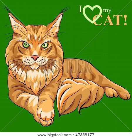 poster of Vector color sketch serious red fluffy Maine Coon (American Longhair) cat lying