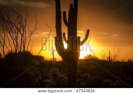 Arizona landscape, sunset saguaro in silhouette over desert.