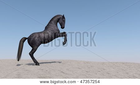 black horse on dune