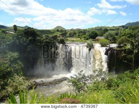 Wasserfall lily