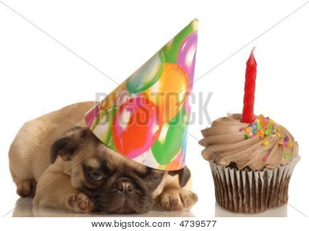 Pug Puppy With Birthday Hat And Cupcake