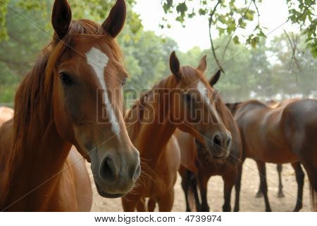 Horse Herd in the countryside of Ukraine poster