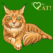 Vector color sketch serious red fluffy Maine Coon (American Longhair) cat lying poster