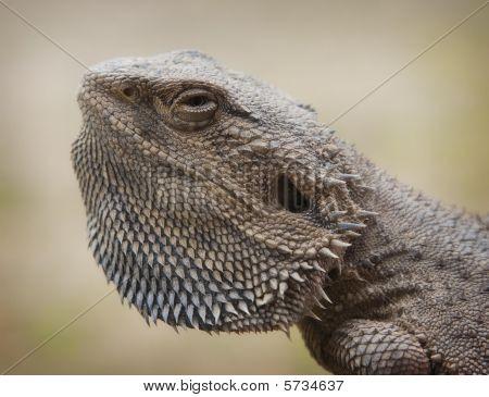 water dragon portrait