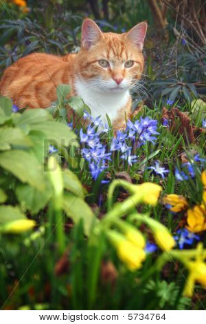 Cat Red Flowers