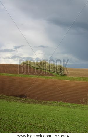 landscape with hills and trees. green farmland in denmark by Mols poster