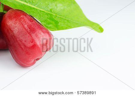 Rose Apple Or Chomphu