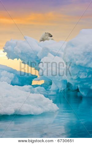 Polar Bear On Frozen Outcrop