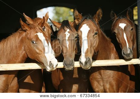 Young and beautiful horses in a stable