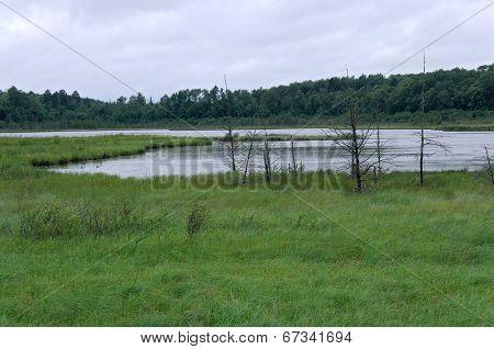 Rice Lake Landscape At Breezy Point