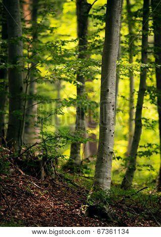 Spring Green Vertical Forest