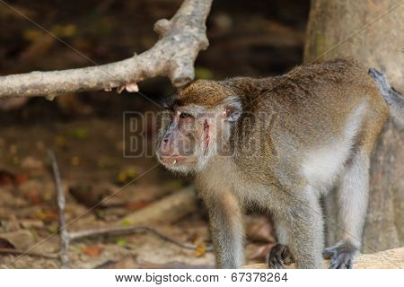 Injured monkey in the jungle
