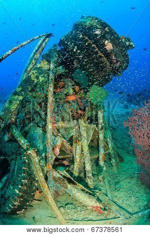 Tropical fish around wreckage