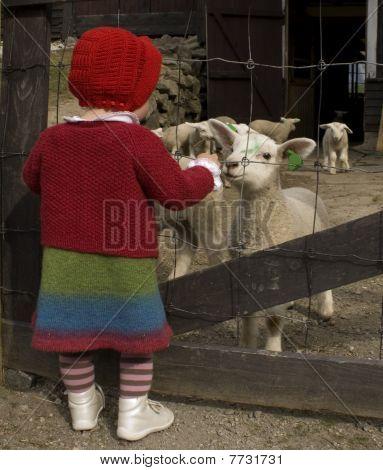 Girl and lambs