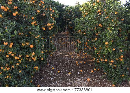 Mediterranean Agriculture