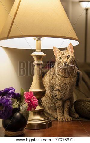 Cat In A Lamp