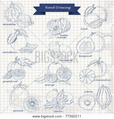 Set Of Citrus Fruits On Paper. Vector Hand Drawing Sketch Illustration