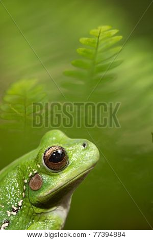 frog on green background.
