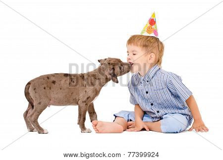 Pit bull puppy kisses the boy