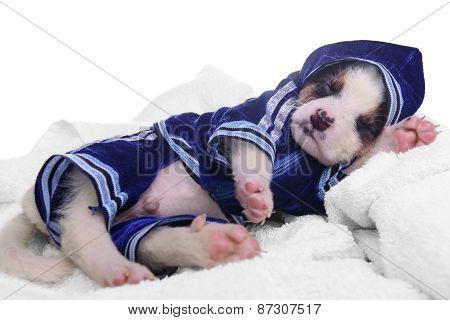 Clothing Puppy Mestizo Sleep