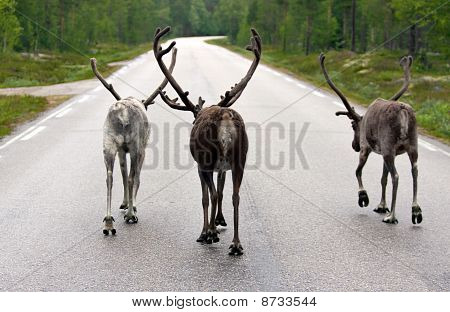 The Gang Walking On A Road