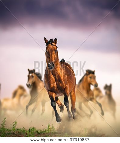 Wild Horses Group Running