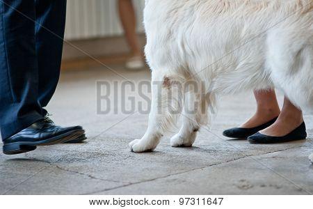 Dog Show Details