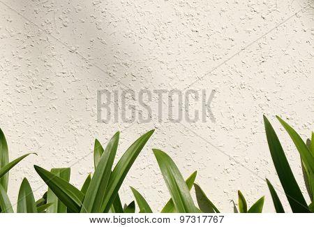 Leaf on white wall (amaryllis leaf)