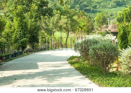 In The Garden Walk Path