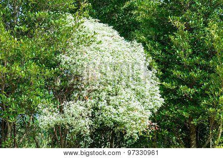 Pattern Bush