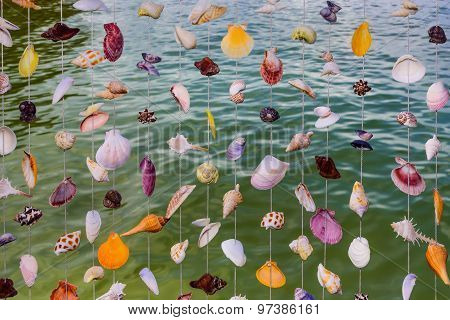 Sea shell curtain