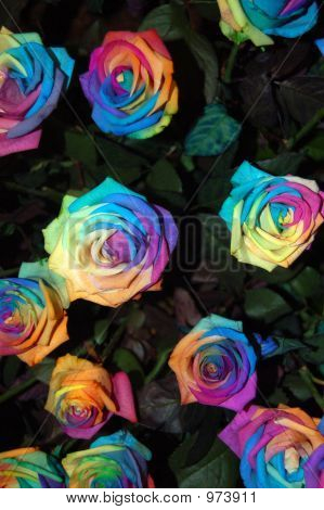 Moroccan Roses