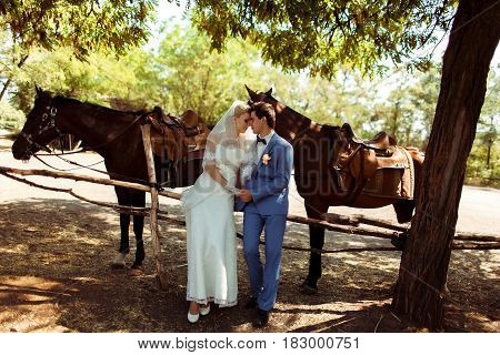 Two horses and newlyweds in the wedding day